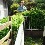 北九州市門司区にてサザンカと他、剪定でした