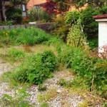 昨日の続きで草むしりと除草剤散布