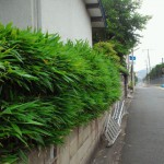 小倉北区で剪定作業でした。