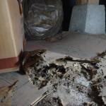 白蟻は床下がベタコンでもつくのです