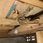 畳裏の白蟻被害