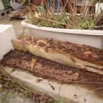 北九州市小倉北区にて白蟻調査でした。