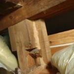 白蟻業者とお客様の意見の相違