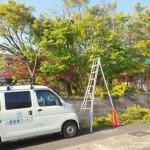 便利屋の仕事で北九州市小倉北区にてもみじの樹の剪定