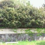 樹木剪定を北九州市小倉北区にて