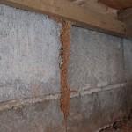 ハネアリに似た茶色の虫はシロアリです|家の中で見かけたら