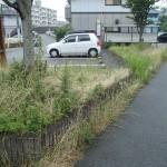 小倉南区にて草むしり