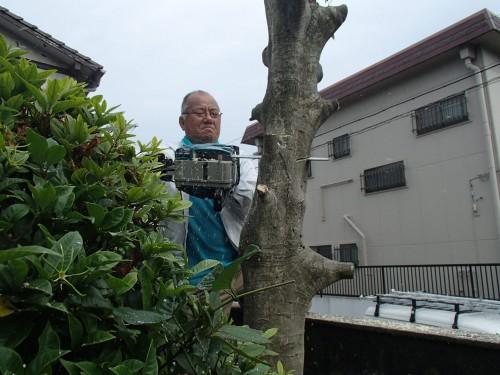 北九州市戸畑区にて樹木の伐採