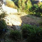 草むしりと樹木剪定を北九州市八幡東区にて