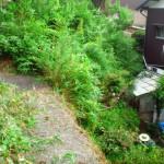 草むしりと樹木剪定を北九州市八幡東区にて3日目