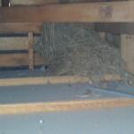 白蟻調査で分かった天井裏の雀の巣