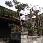 庭仕事を北九州市八幡西区で、ハチの巣除去を小倉南区で。