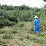 本日は北九州市門司区にて草刈&樹木剪定でした
