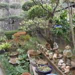 草むしりと庭木の剪定を北九州市小倉北区にて