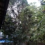 北九州市小倉北区にて樹木剪定と処分