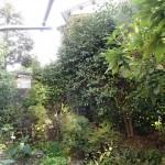 北九州市小倉北区にて樹木剪定と下の草むしり、そして処分の心だ~っ!