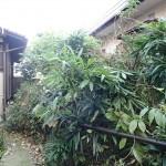 師走の樹木剪定を北九州市小倉北区にて