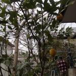 樹木剪定と桜の伐根を北九州市若松区にて