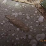 北九州市門司区にてハネアリの白あり調査