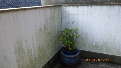 外塀の高圧洗浄を北九州市門司区にて