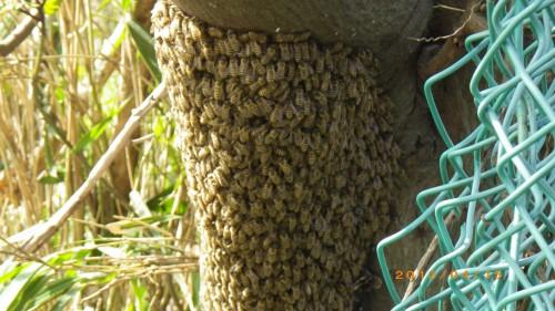 ハチ駆除を北九州市門司区で