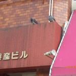 鳩対策の調査を北九州市小倉北区にて