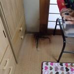 北九州市八幡西区にてイエシロアリの白蟻調査見積