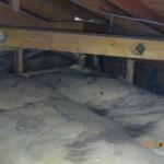 天井裏でゴソゴソしてるのはイタチのようでした