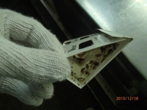 ゴキブリ駆除消毒を北九州市の飲食店様で