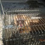 イタチの侵入口塞ぎの作業を北九州市小倉北区にて