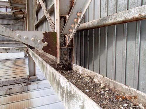 屋上の鳩被害の調査見積りを北九州市小倉北区で