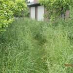 今日は、小倉南区にて草刈
