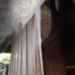 スズメバチの駆除を北九州市小倉北区で施工