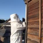 小倉南区のハチ駆除