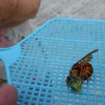 北九州市門司区で玄関の上にスズメバチ