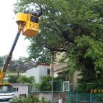 桜の伐採を戸畑区にて