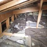 屋根裏のイタチ駆除のお問い合わせを北九州市門司区 から