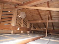 八幡西区のスズメバチの巣は5段の層になってました