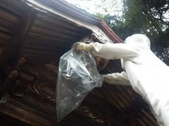 スズメバチをビニール袋で