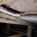 久留米市でシロアリ駆除施工後の保証期間中点検