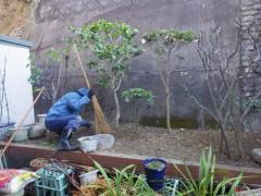 本日は小倉北区で剪定と草むしり