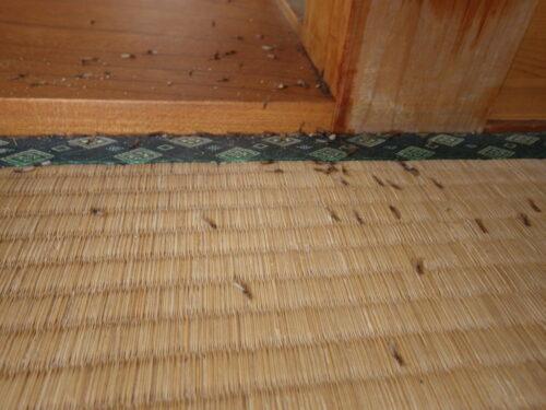 二階和室の柱からハネアリが|初期症状を超えた被害が下関市で