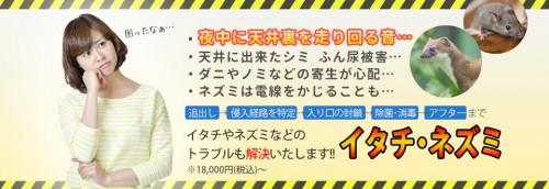 福岡市で害獣駆除業者を探すなら実績多数の【あい営繕】