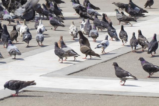 鳩のフン害に困って駆除を検討の時に役立つ記事