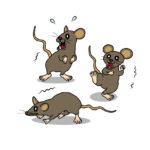 ネズミ駆除の手順とやり方【自分で駆除】