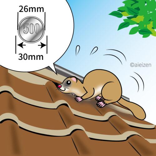 屋根裏に何かいる!?潜んでいる動物の特定方法と撃退法