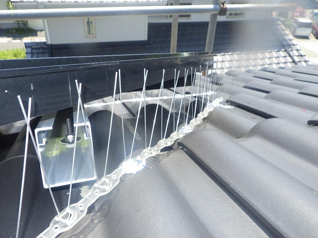 福津市で太陽光パネルに鳩の巣で糞や小枝被害の駆除と予防依頼事例の紹介