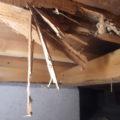 家の壁や柱をリフォームする時に知っておきたいシロアリ駆除のこと